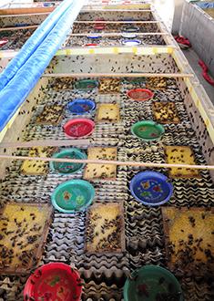 Insektfarm